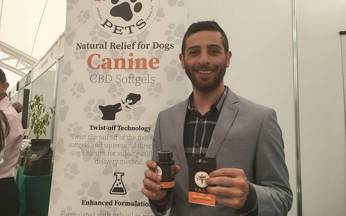 Crean Panacea Pets, cannabis para perros que sufren cáncer