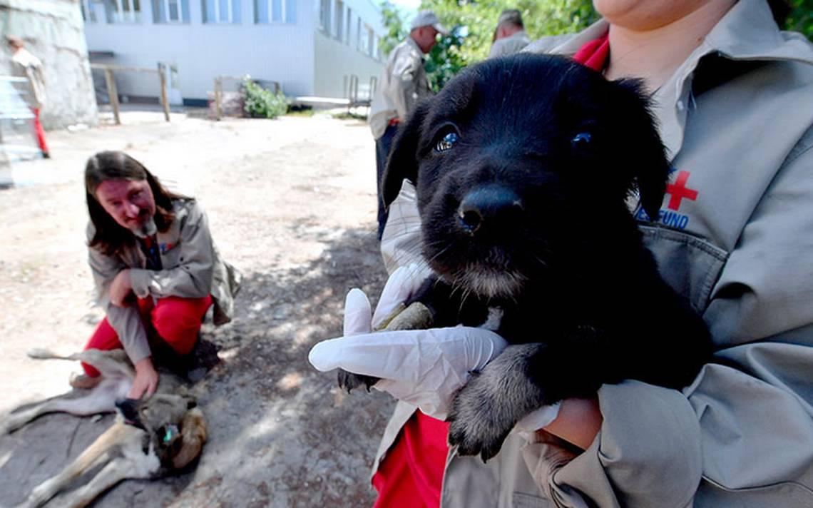 El sueño americano de los perros de Chernóbil