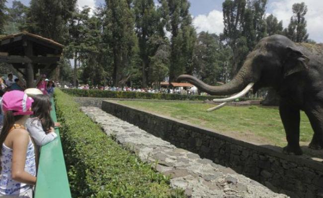 Zacango, primer zoológico de México que se convierte en Parque Ecológico