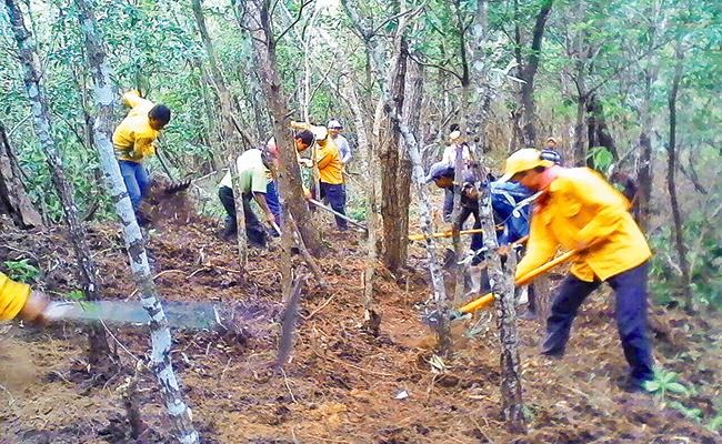 Estiaje daña 72 hectáreas de áreas naturales en Chiapas