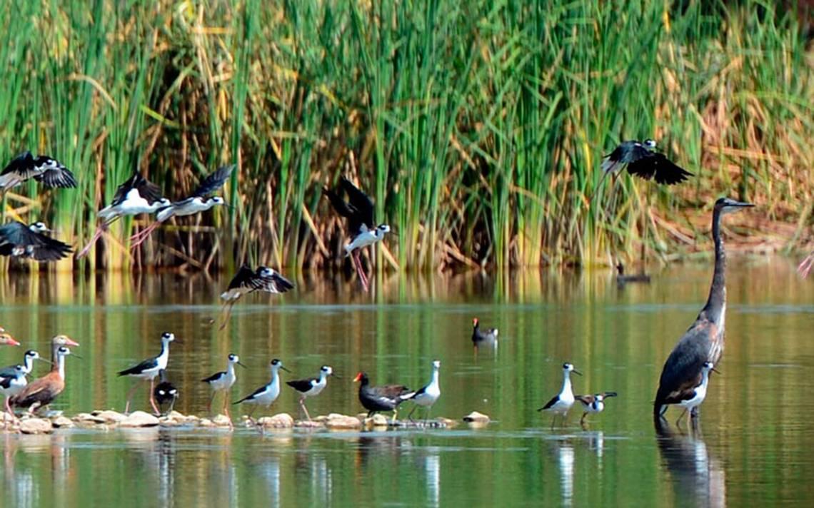 Dieron el grito en reserva ecológica de Meoqui