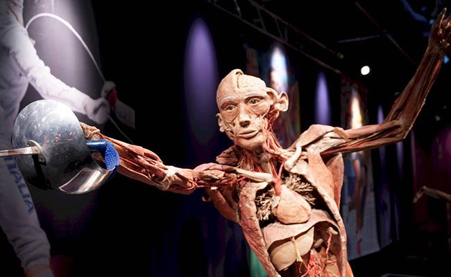 Muestra sobre anatomía en Roma cancela espectáculo tras causar desmayos