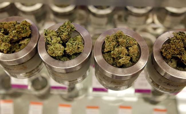97 años después, la marihuana mantiene su estatus: proscrita