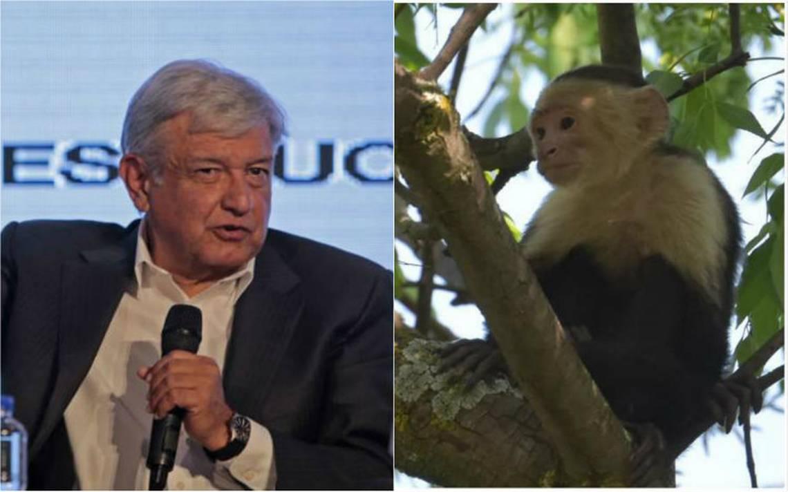 Tatiana Clouthier se burla de Meade con video de AMLO y el mono capuchino