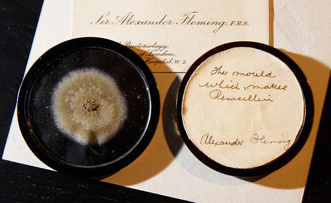 Subastan moho que usó Alexander Fleming para crear la penicilina
