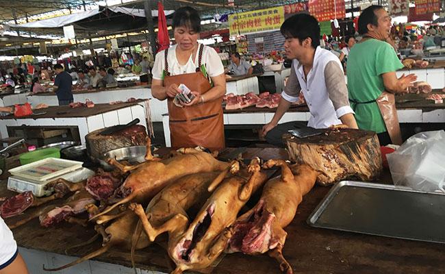 Pese a prohibición, Yulin vende carne de perro en festival anual