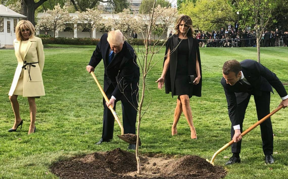 Desaparece el roble que Trump y Macron plantaron en la Casa Blanca