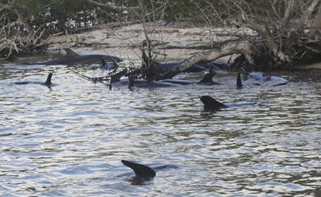 Hallan ballena varada con 30 bolsas de plástico en el estómago