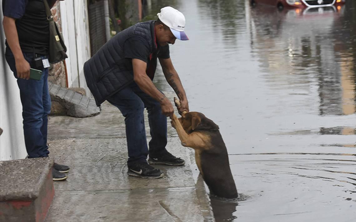 Lluvias en Irapuato deja inundaciones, daños y caída de árboles