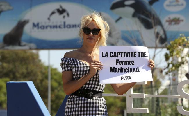 """""""El cautiverio mata"""", Pamela Anderson protesta en Francia contra parque acuático"""