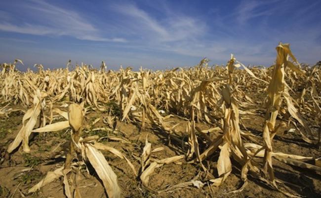 Conluye emergencia por sequía en cuencas del país