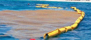 Gobierno de Quintana Roo pedirá apoyo internacional para combatir sargazo