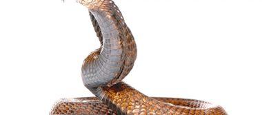 Campesino muy grave tras mordida de serpiente