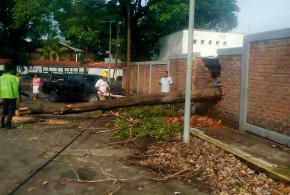 Lluvia provoca caída de árboles y falla de energía eléctrica