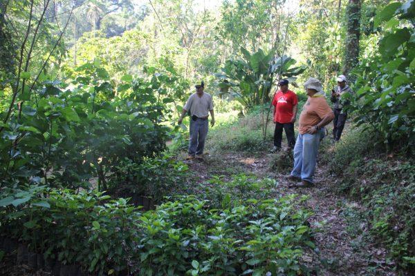 Caficultores analizan crear la comisión del café