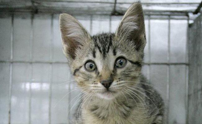 Policía busca a persona misteriosa que rapa gatos en Virginia