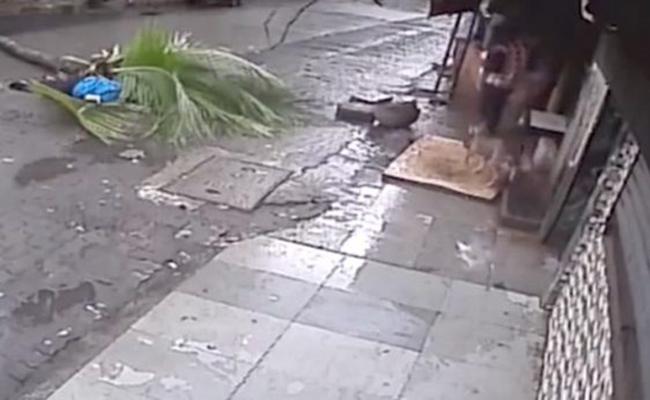 [Video] Fallece presentadora de TV después de ser golpeada por una palmera