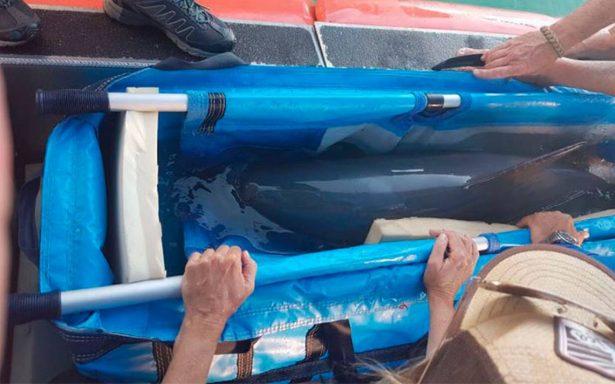 Tras muerte de vaquita marina, suspenden programa de rescate