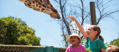 Reproducen en ZooIra animales en peligro de extinción