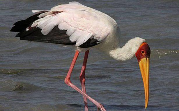 Denuncian tráfico de especies protegidas
