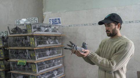 La colombofilia es el arte de criar y entrenar palomas mensajeras de la especie Columba livia,  su finalidad es deportiva, pero también se utilizan también labores de rescate.