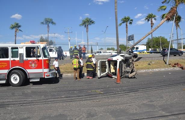 Una palmera detuvo la loca carrera de camioneta