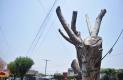 Ambientalistas exigen frenar la tala innecesaria