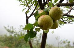 La Mirada de Hugo Camacho — Amor con aroma de manzana