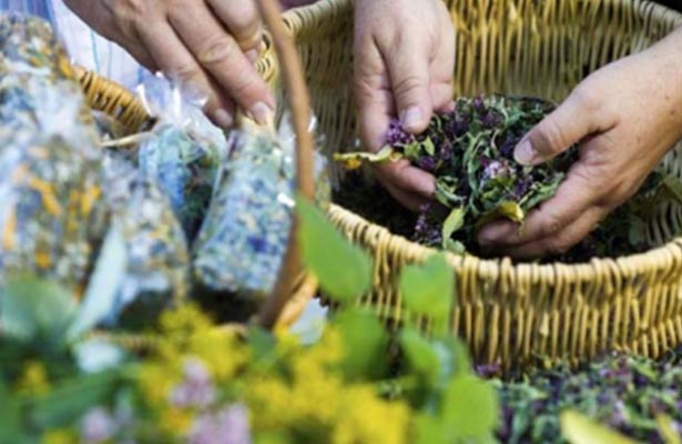 Proponen legislar sobre consumo de plantas medicinales