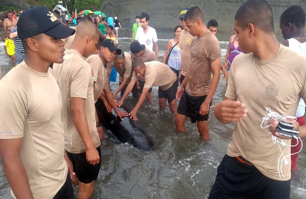 Armada de Colombia salva la vida a ballena