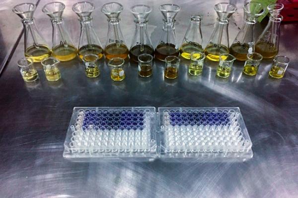 Universitaria analiza propiedades de la chaya para prevenir enfermedades