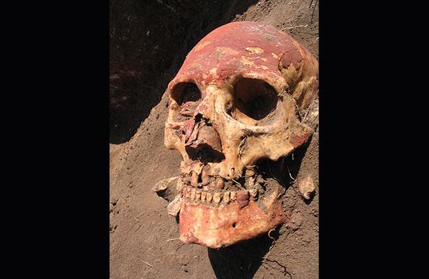 Calavera del pueblo Yamnaya de la edad de Bronce (hace 5.000 años) que fue portador de la bacteria de la peste, Y. pestis, la cual se trasmitió en sus comienzos de persona a persona Foto: Natalia Shishlina, Universidad de Cambridge)