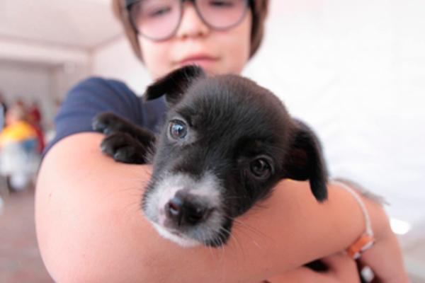 Darán en adopción a 16 perros rescatados tras sismo