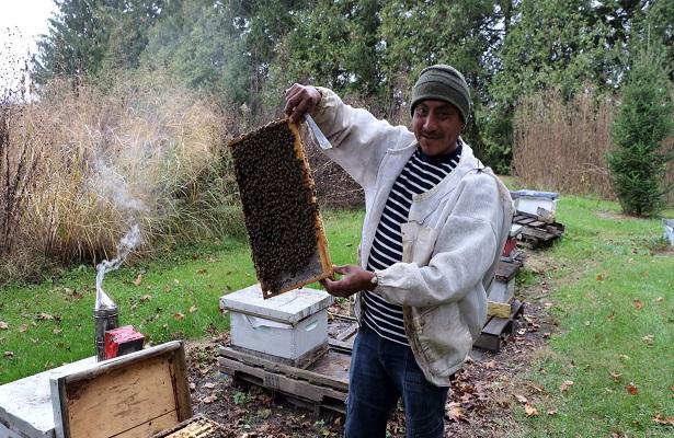Maya cría abejas en Canadá