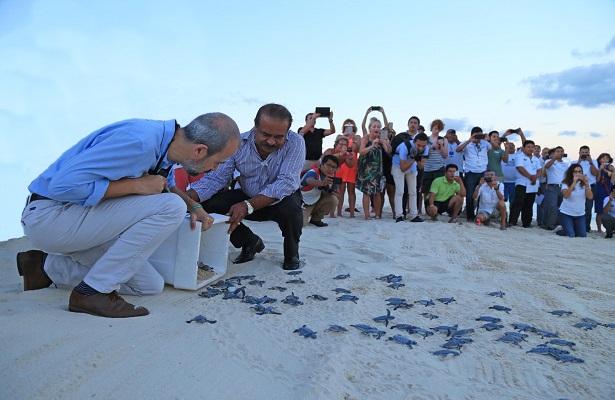 Liberan en Solidaridad más de 61 mil crías de tortuga marina