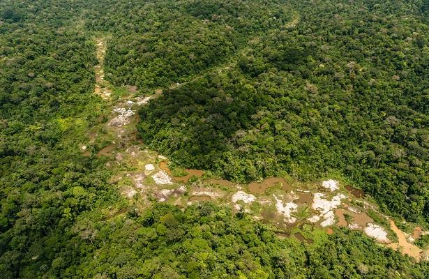 Piden a Brasil erradicar deforestación en área del Amazonas