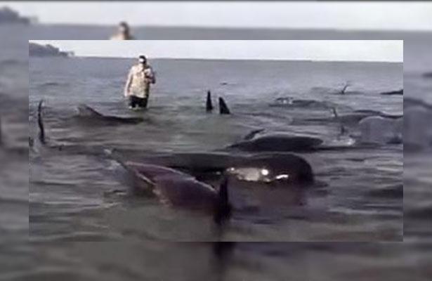 Mueren cuatro ballenas al quedar varadas en una playa de Indonesia