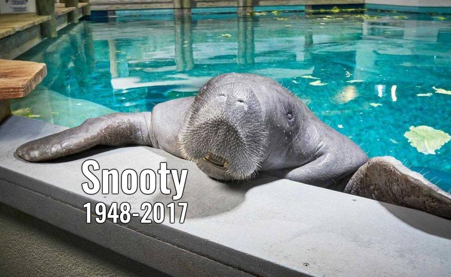Muere el manatí mas longevo del mundo dos días después de su cumpleaños