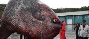 Terrorífico pez de una tonelada sorprende a pescadores