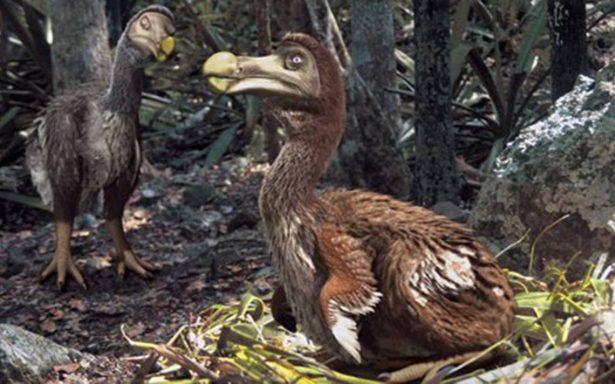 Huesos revelan nuevos datos del pájaro dodo, extinguido hace 300 años