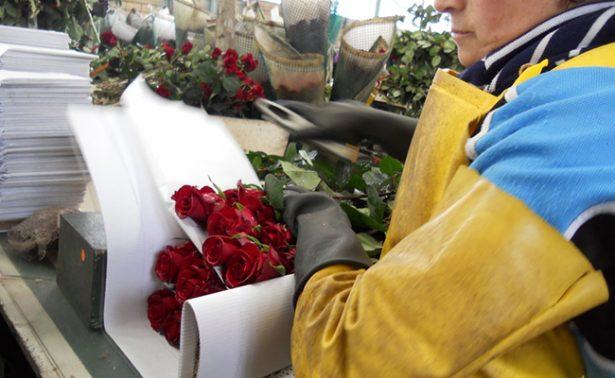 Transporta Avianca Cargo más de 11 mil toneladas de flores por San Valentín