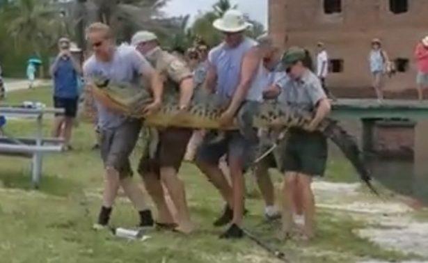 Trasladan al cocodrilo más solitario del mundo al sur de Florida