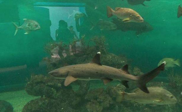 """Tiburones del Acuario Mazatlán se """"mudan"""" a Guadalajara"""