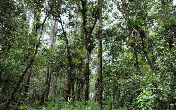 Entregan apoyos para combatir plagas forestales en Oaxaca