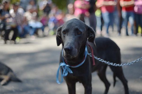 Promueve Ayuntamiento tenencia responsable con pasarela canina