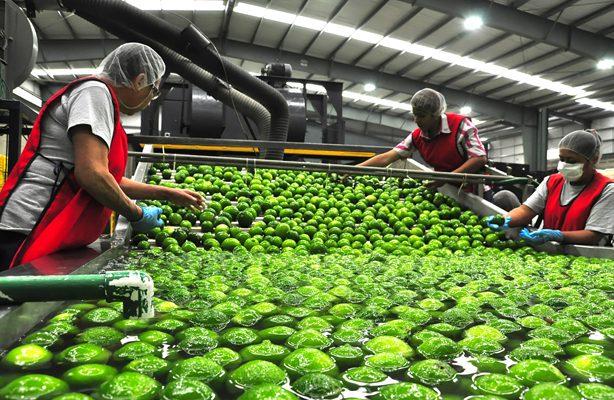Limones de Martínez compiten  contra Brasil en mercado mundial