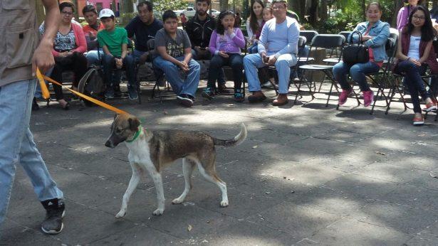 Avanza cultura de adopción de animales