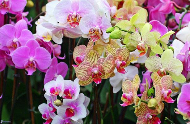 En abril, Coatepec será sede de la Feria Nacional de la Orquídea