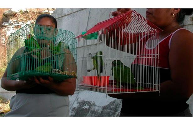 Persiste venta ilegal de aves rapaces