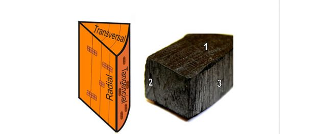 ¿Cómo puedes identificar un trozo de madera o carbón vegetal de forma rápida, sencilla y barata?